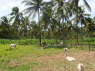 Farm for sale in Pitimbu - Animal enclosure