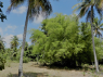 Farm for sale in Joao Pessoa - Bamboo on the land