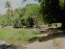 Farm for sale in Joao Pessoa - Bamboo walkway
