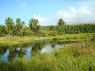 Farm for rent in Joao Pessoa - Plenty of water on these farms