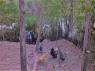 Country Home for sale in Belo Horizonte - Chickens