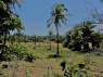 Farm for sale in Joao Pessoa - Land view (2)