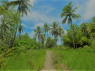 Farm for sale in Joao Pessoa - Farm trail