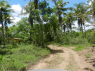 Hotel/Pousada for sale in Joao Pessoa - Driving through the forest