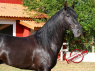 Farm for sale in Sao Paulo - Horse exported to USA from this ranch 1