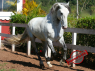 Farm for sale in Sao Paulo - Horse exported to USA from this ranch 2