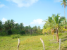 Farm for sale in Pitimbu - Land view 1