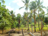 Farm for sale in Pitimbu - Land view 2