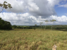 Farm for sale in Joao Pessoa - Plenty of open land