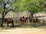 Hotel/Pousada for sale in Campina Grande - Horse riding on the farm