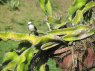 Country Home for rent in Joao Pessoa - Birdlife in the garden - bem-te-vi