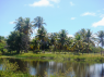Farm for sale in Pitimbu - Coconut palms and lake view
