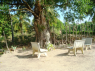 Farm for sale in Pitimbu - Seating area