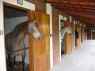Farm for sale in Sao Paulo - Stables and horses