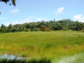 Farm for sale in Joao Pessoa - General land view