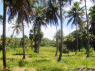 Farm for sale in Joao Pessoa - Land view from close to the house