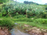 Farm for sale in Campina Grande - Stream and banana trees